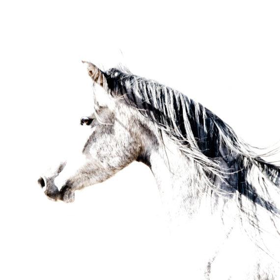 Cathy Prettejohn | Horse 001