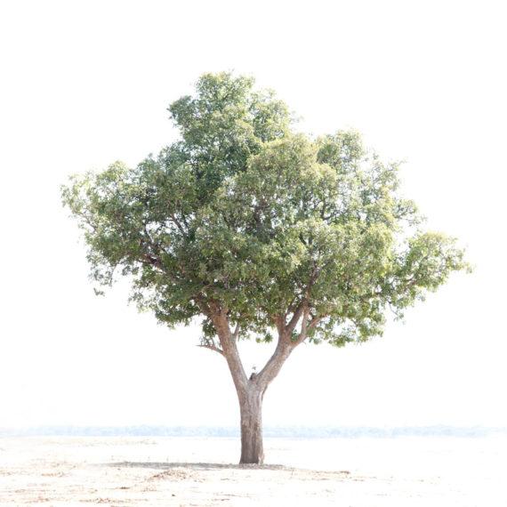 Cathy Prettejohn | Tree 049